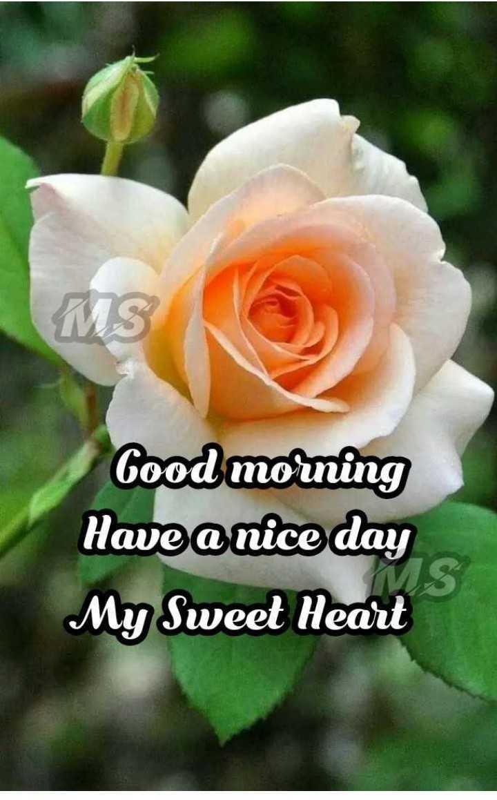 🌞 सुप्रभात 🌞 - MS Good morning Have a nice day My Sweet Heart - ShareChat