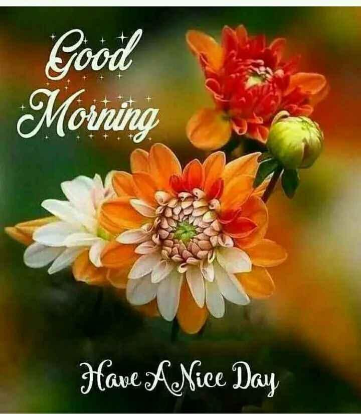 🌞सुप्रभात🌞 - Good Morning Have A Nice Day - ShareChat