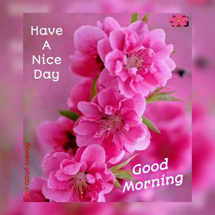 🌄सुप्रभात - Have Nice Day flowers - photo . com Good Morning - ShareChat