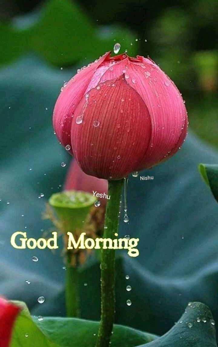 🌄सुप्रभात - Nishu Yeshu Good Morning - ShareChat
