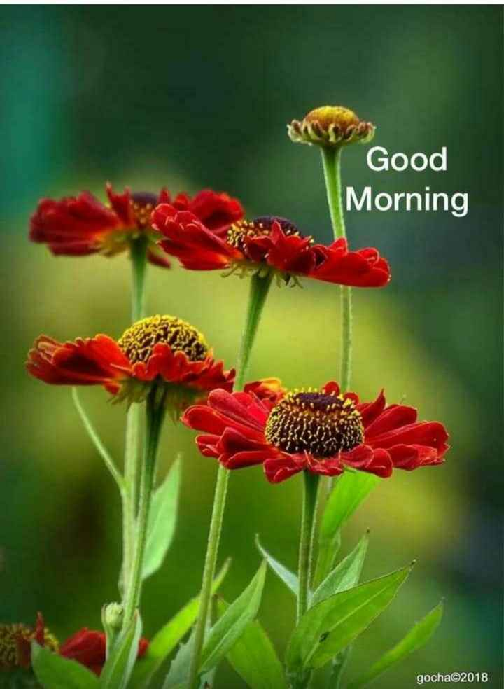 🌄सुप्रभात - Good Morning gocha©2018 - ShareChat