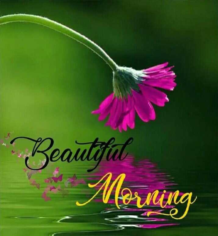 🌄सुप्रभात - Beautiful : Morning - ShareChat