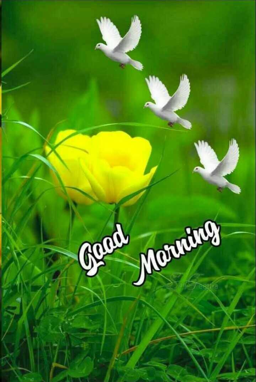 🌄सुप्रभात - Good Morning restha - ShareChat