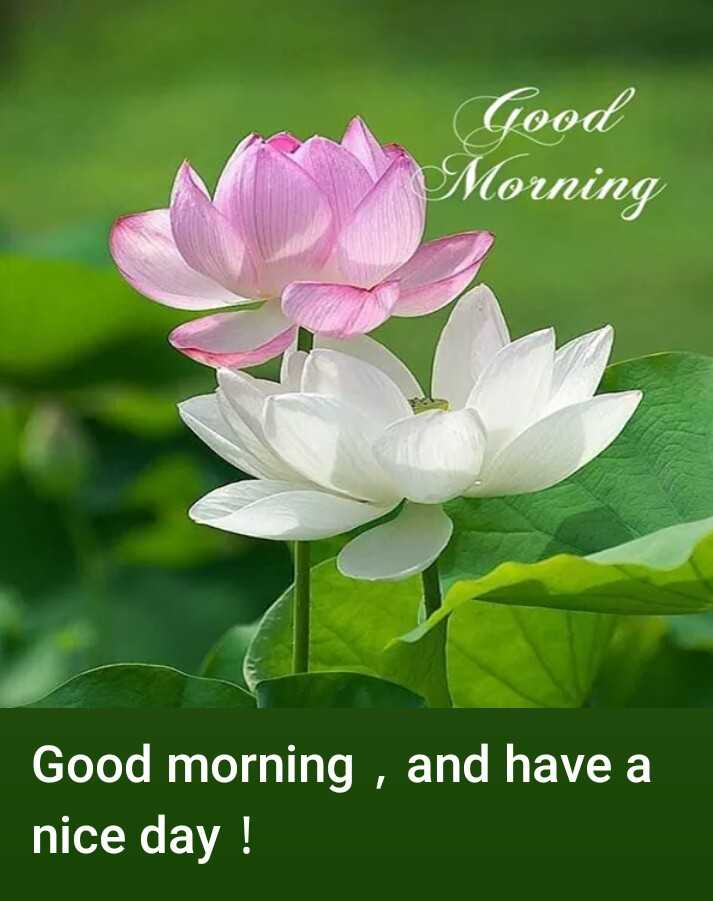 🌄सुप्रभात - Good Morning Good morning , and have a nice day ! - ShareChat