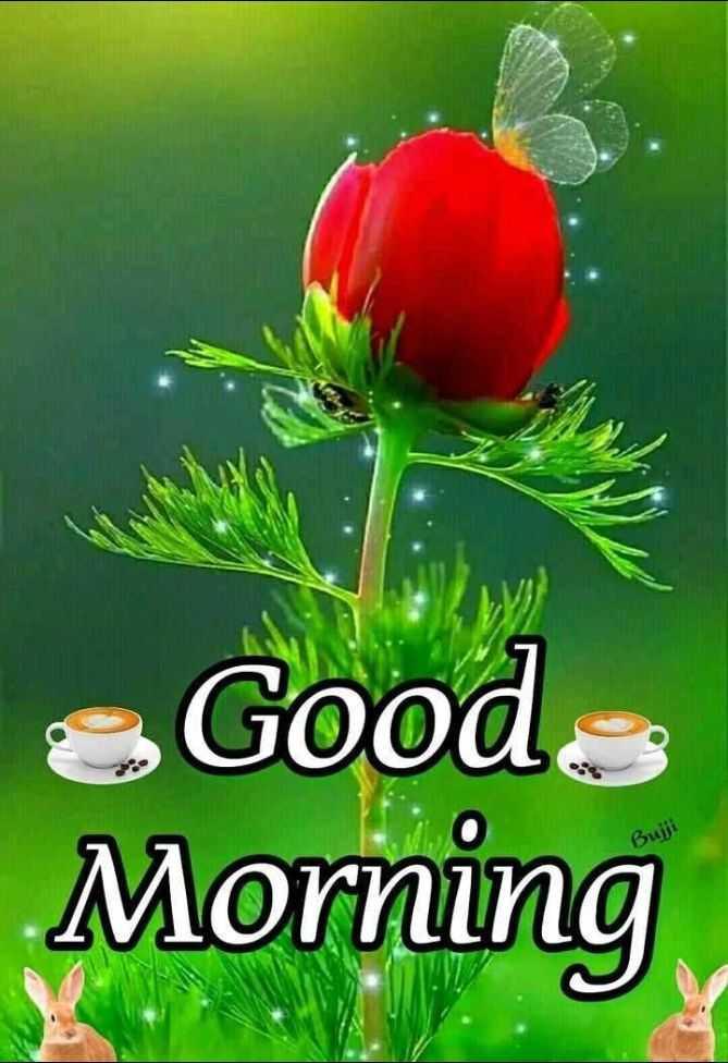 🌄सुप्रभात - Good Morning - ShareChat
