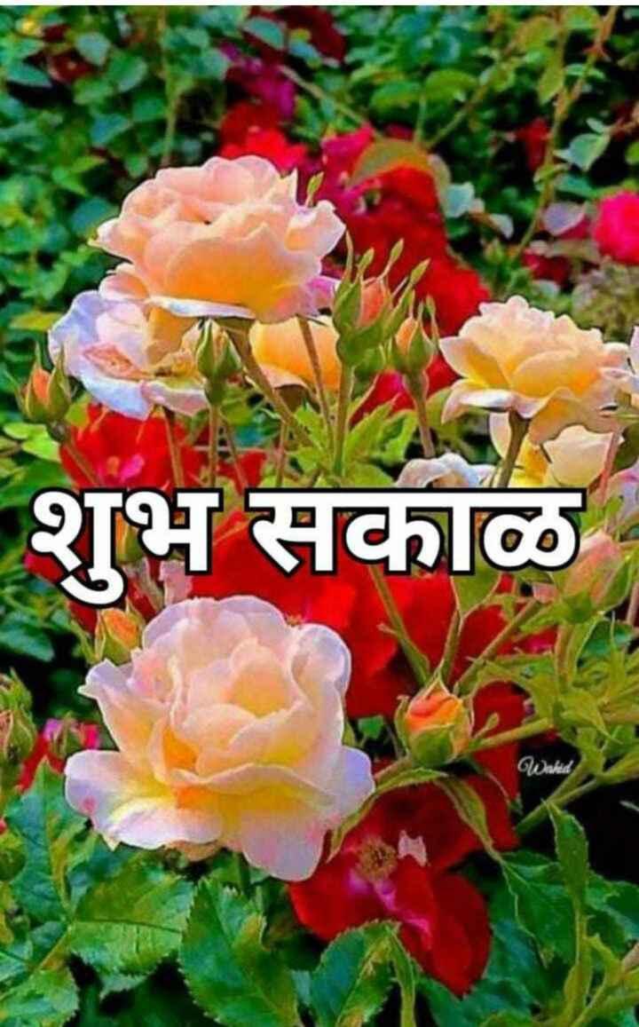 🌄सुप्रभात - शुभ सकाळ Wahid - ShareChat