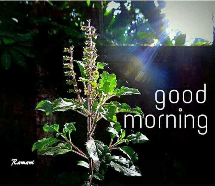 🌄सुप्रभात - good morning Ramant - ShareChat