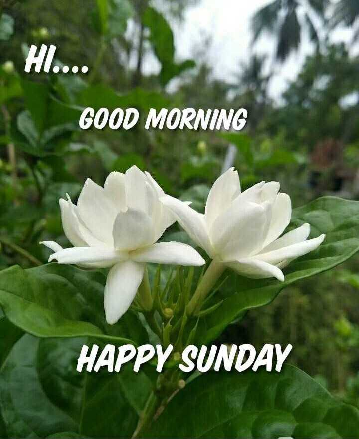 🌄सुप्रभात - HI . . . . GOOD MORNING HAPPY SUNDAY - ShareChat