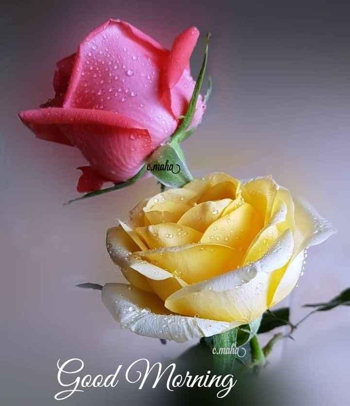 🌞 सुप्रभात 🌞 - c . maha c . maha Good Morning - ShareChat