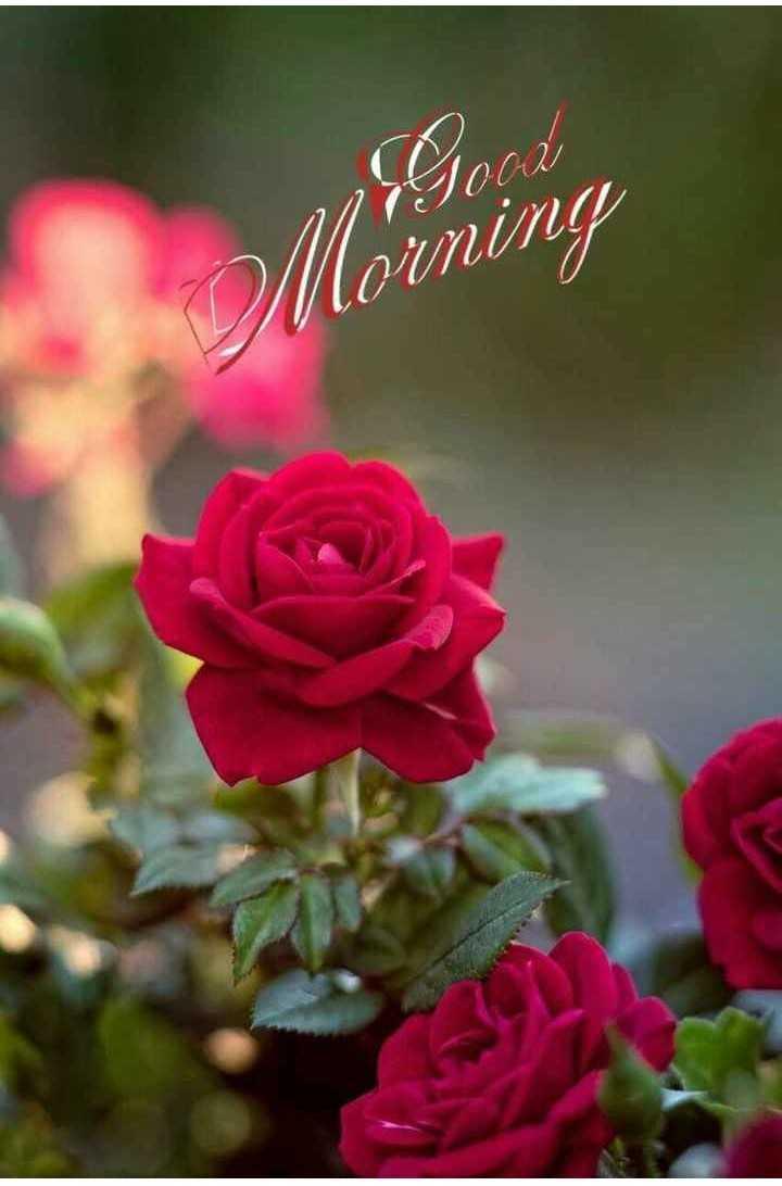 🌄सुप्रभात - Morning - ShareChat