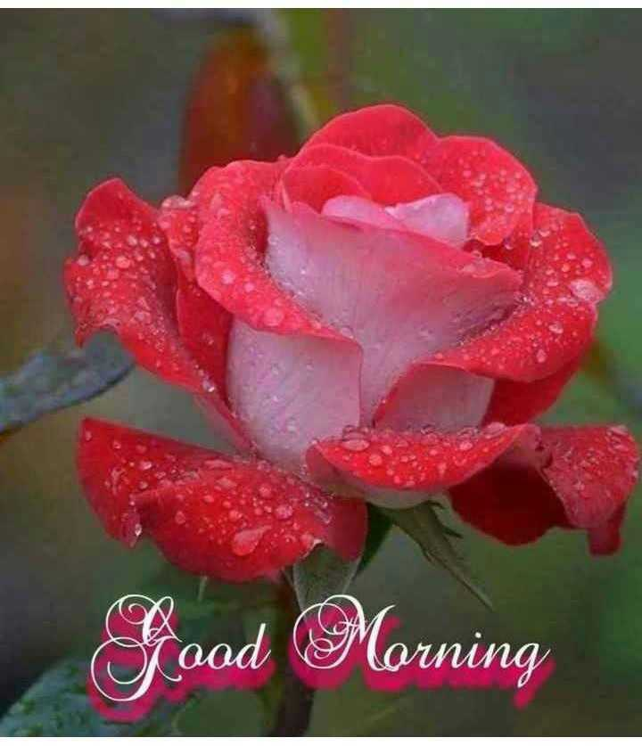 🌄सुप्रभात - Sood Morning - ShareChat