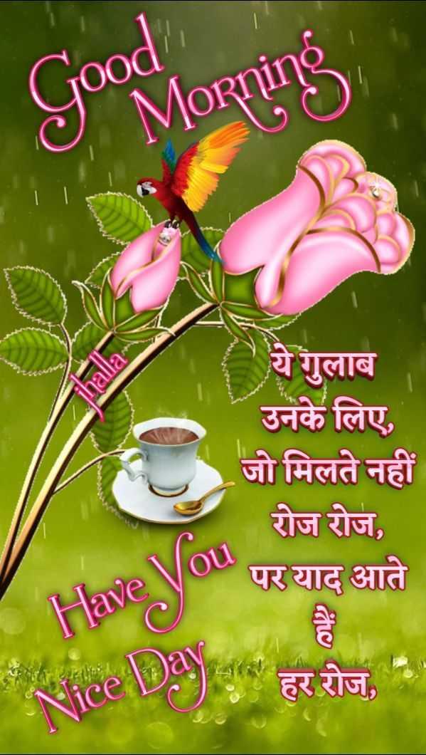 🌞 सुप्रभात 🌞 - Good / Goodmorning IVIORnino L ' ये गुलाब उनके लिए , जो मिलते नहीं रोज रोज , JOU पर याद आते KiceDayg हर रोज , - ShareChat