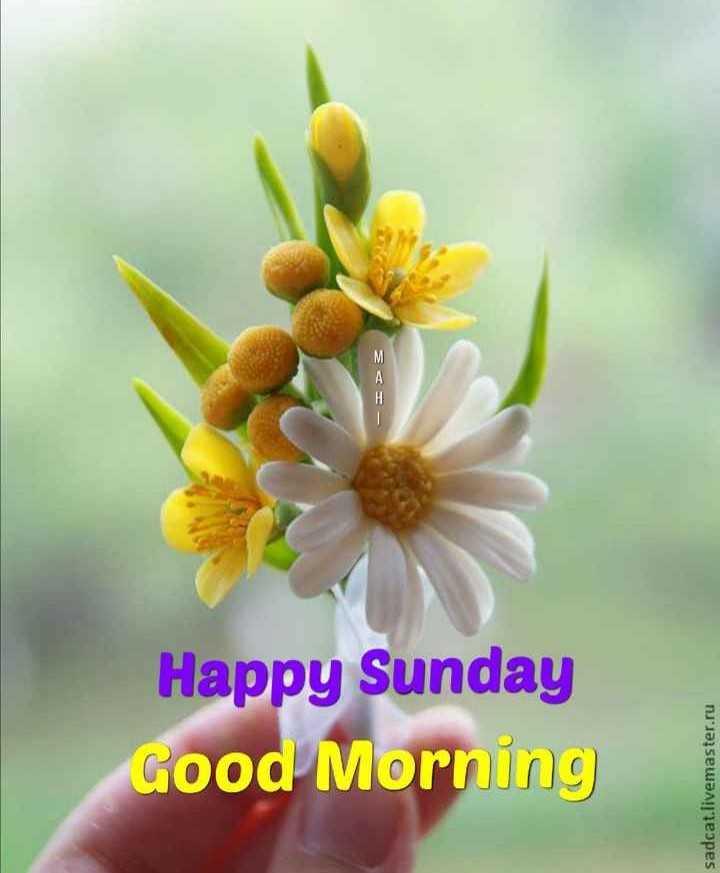 🌄सुप्रभात - Good Morning Happy Sunday - > 3 sadcat . livemaster . ru - ShareChat