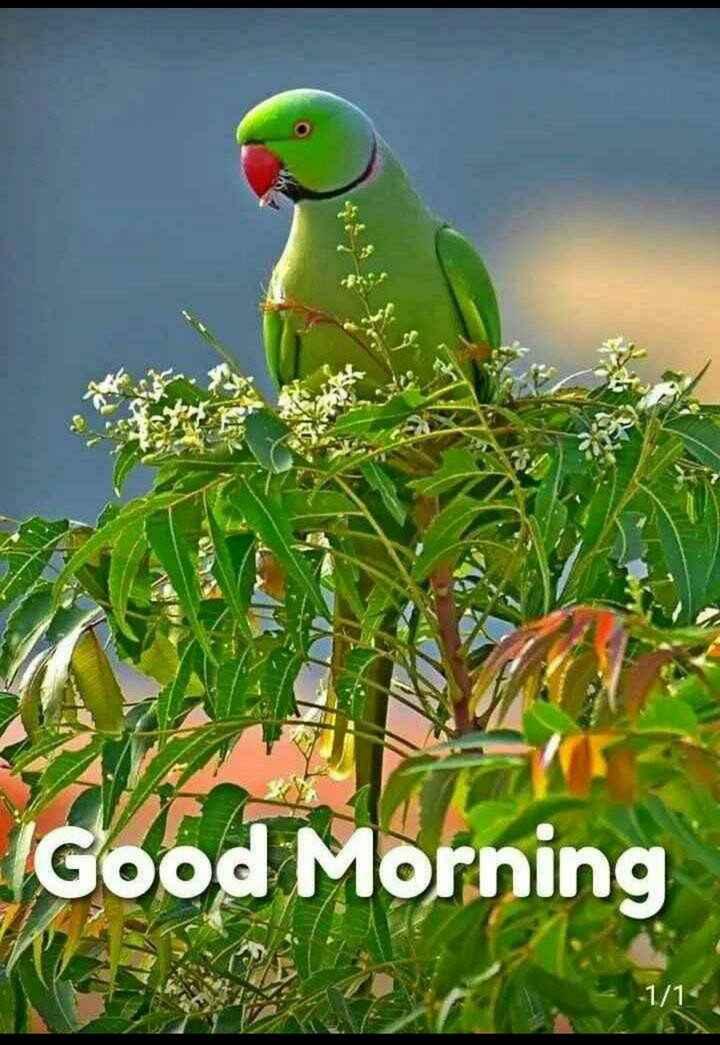 🌞 सुप्रभात 🌞 - IGood Morning - 1 / 1 - ShareChat