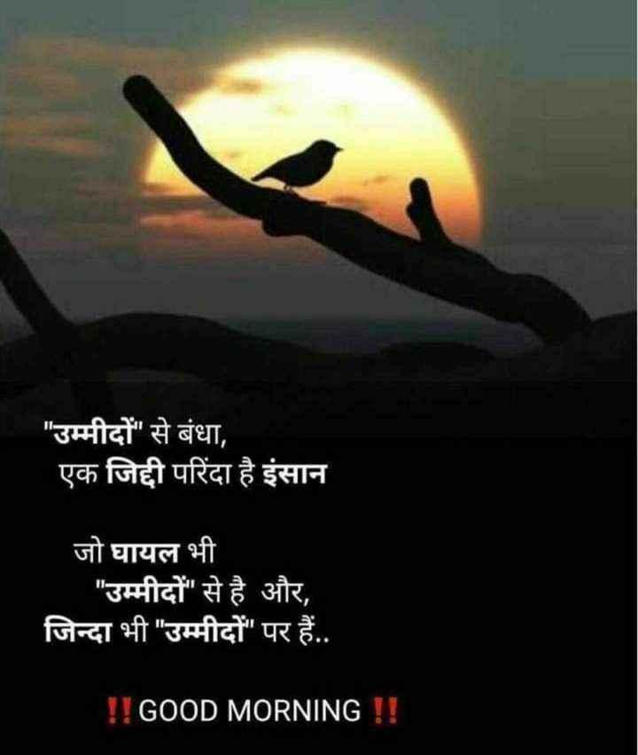 🌄सुप्रभात - उम्मीदों से बंधा , एक जिद्दी परिंदा है इंसान जो घायल भी उम्मीदों से है और , जिन्दा भी उम्मीदों पर हैं . . ! ! GOOD MORNING ! ! - ShareChat