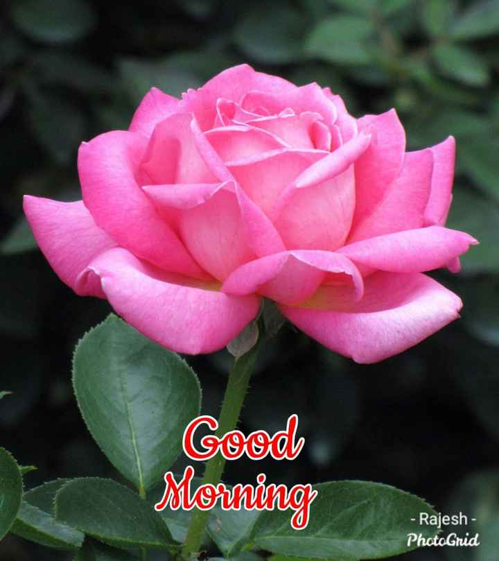 🌄सुप्रभात - Cood Morning - Rajesh - PhotoGrid - ShareChat