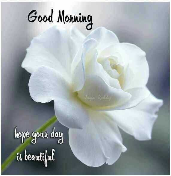 🌄सुप्रभात - Good Morning sasa Rede hope your day is beautiful - ShareChat