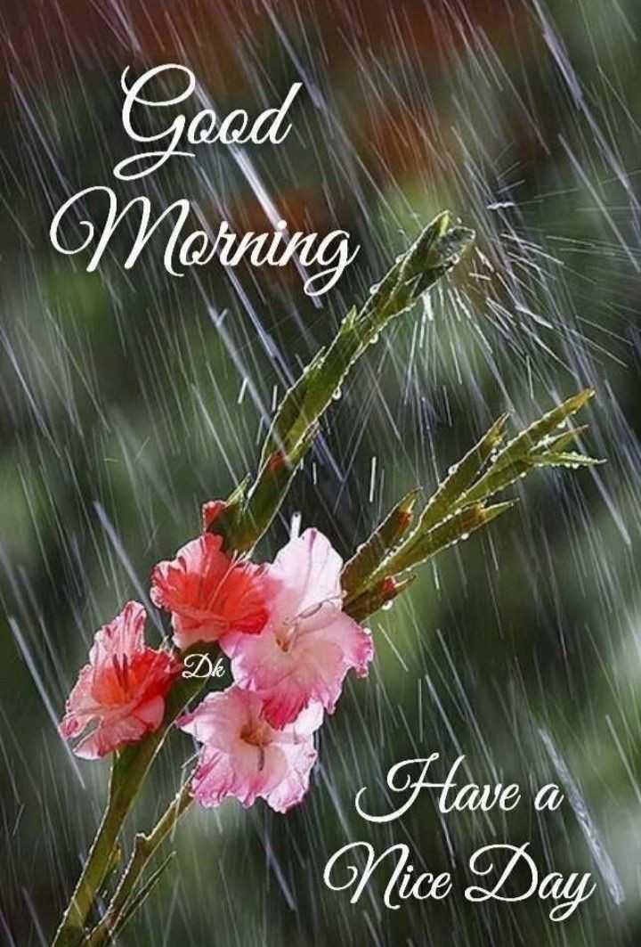 🌄सुप्रभात - Good - Morning Have a Nice Day - ShareChat