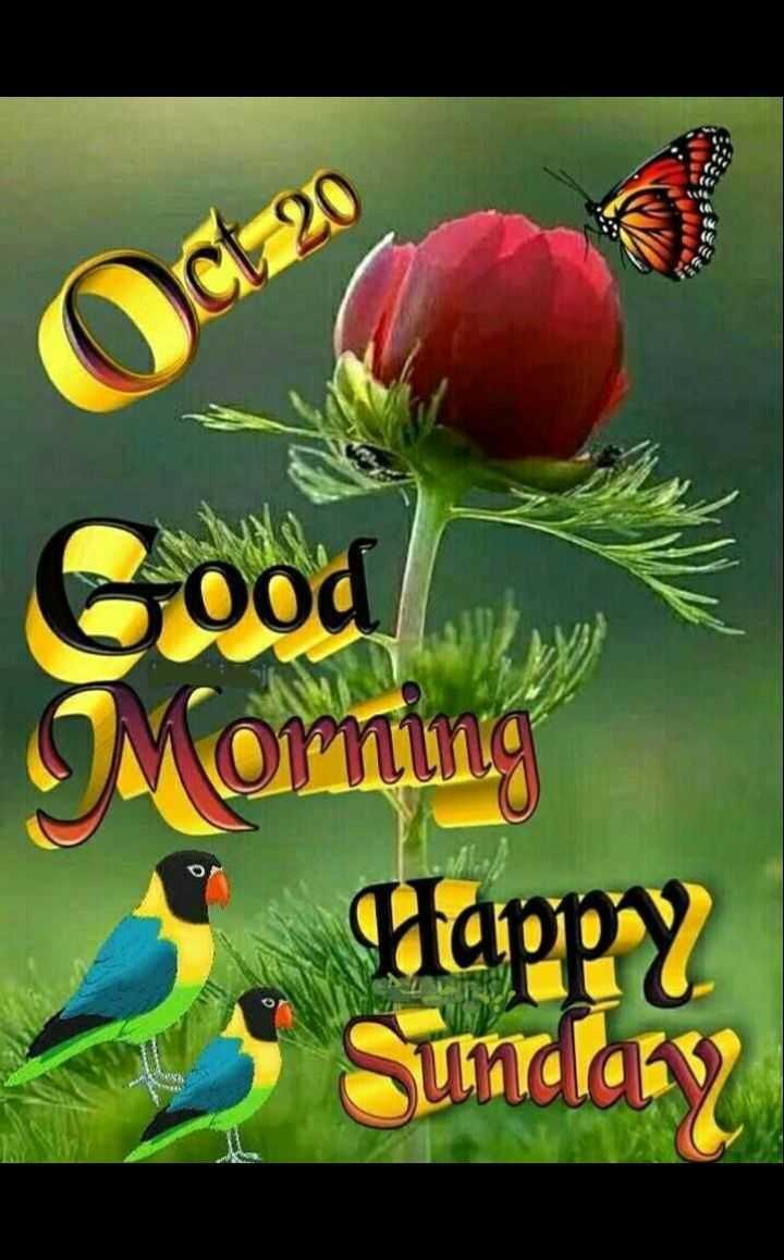 🌞 सुप्रभात 🌞 - ShareChat