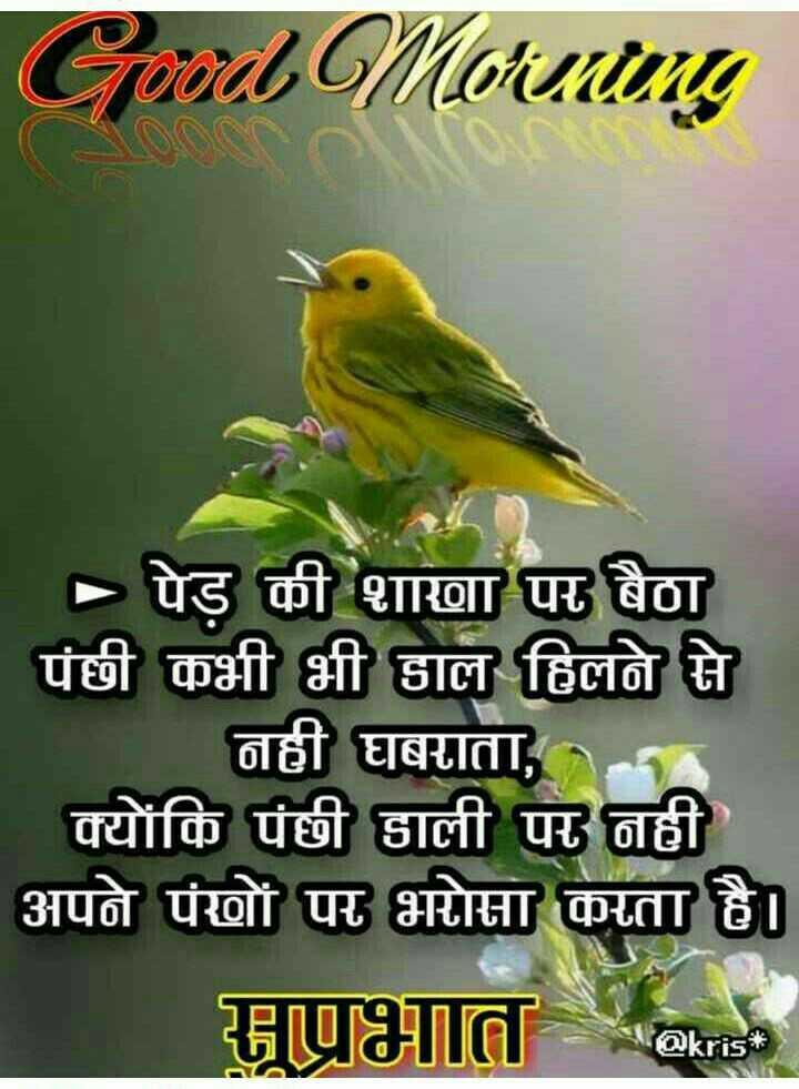👌सुविचार - Good Morning | > पेड़ की शाणा पर बैठा पंछी कभी भी हाल हिलने से नही घबराता , क्योंकि पंछी डाली पर नही अपने पंखों पर भरोसा कराता है । सुप्रभात * - ShareChat
