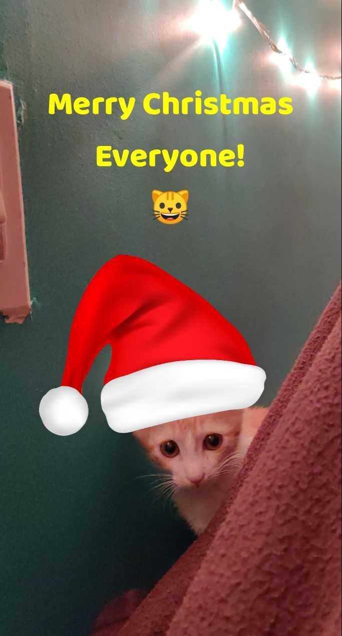 🎅🏻सेल्फी विथ सांता हैट🤳🏻 - Merry Christmas Everyone ! - ShareChat