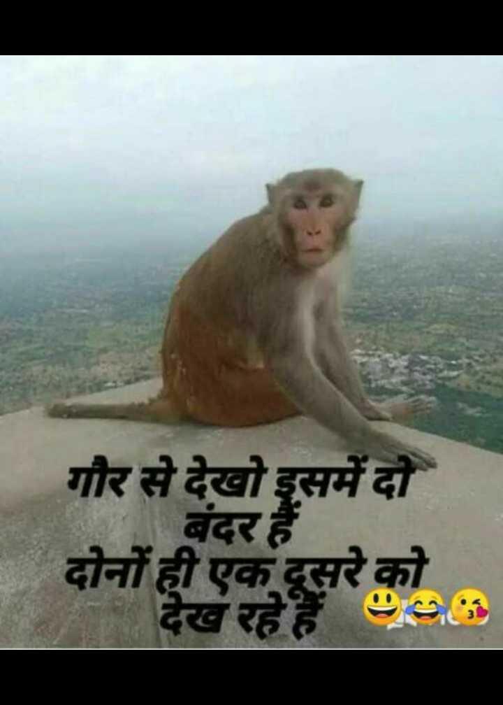 😄 हँसिये और हँसाइये 😃 - दोनों ही एक दूसर गौर से देखो इसमें दो बंदर हैं देख रहे हैं : - ShareChat