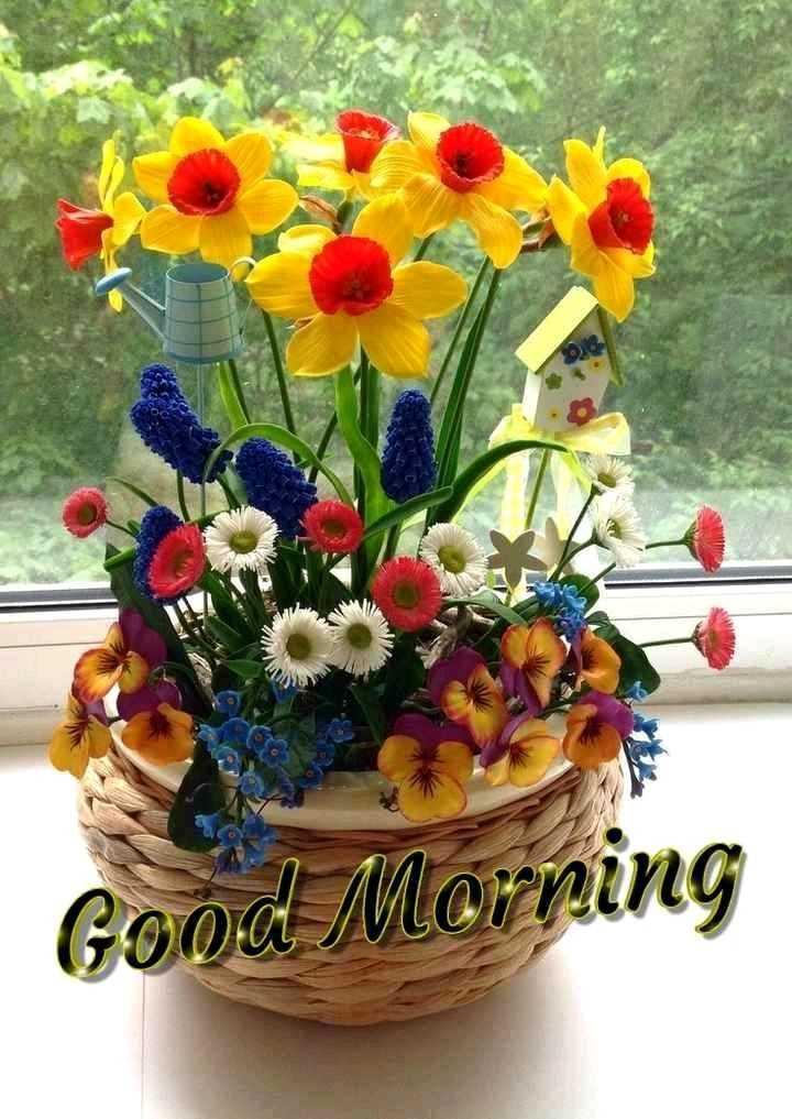 🎂हॅपी बर्थडे - Good Morning - ShareChat