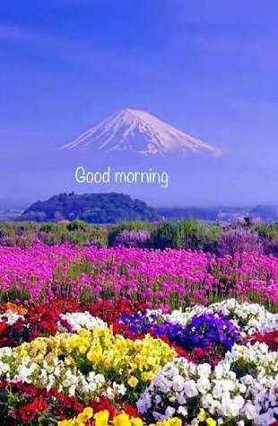 🎂 हैप्पी बर्थडे एवेलिन शर्मा - Good morning - ShareChat