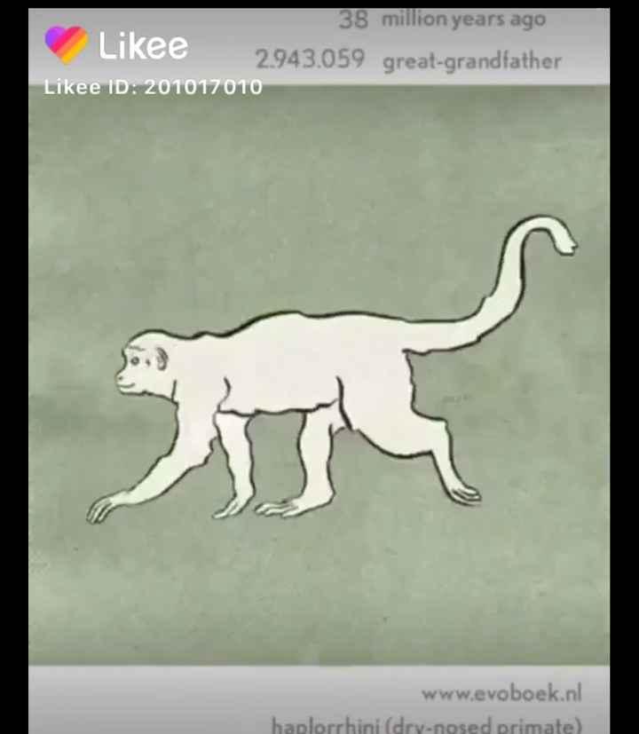 🎂 हैप्पी बर्थडे गूगल - 38 million years ago Likee 2943 . 059 great - grandfather Likee ID : 201017010 www . evoboek . nl haplorrhini ( dry - nosed primate ) - ShareChat