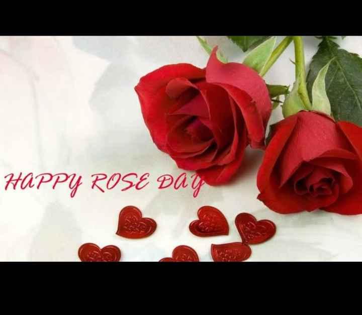 🌹 हैप्पी रोज़ डे 🌹 - HAPPY ROSE DAY - ShareChat
