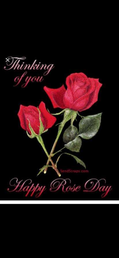 🌹 हैप्पी रोज़ डे 🌹 - Thinking of you SendScraps . com Happy Rose Day - ShareChat