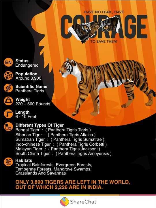 ইন্টারন্যাশনাল টাইগার ডে  🐯 - HAVE NO FEAR , HAVE CERIGE TO SAVE THEM EN Status Endangered Population Around 3 , 900 Scientific Name Panthera Tigris Weight 220 - 660 Pounds Length 6 - 10 Feet Different Types Of Tiger Bengal Tiger : ( Panthera Tigris Tigris ) Siberian Tiger : ( Panthera Tigris Altaica ) Sumatran Tiger : ( Panthera Tigris Sumatrae ) Indo - chinese Tiger : ( Panthera Tigris Corbetti ) , Malayan Tiger : ( Panthera Tigris Jacksoni ) , South China Tiger : ( Panthera Tigris Amoyensis ) Habitats Tropical Rainforests , Evergreen Forests , Temperate Forests , Mangrove Swamps , Grasslands And Savannas ONLY 3 , 890 TIGERS ARE LEFT IN THE WORLD , OUT OF WHICH 2 . 226 ARE IN INDIA , ShareChat - ShareChat