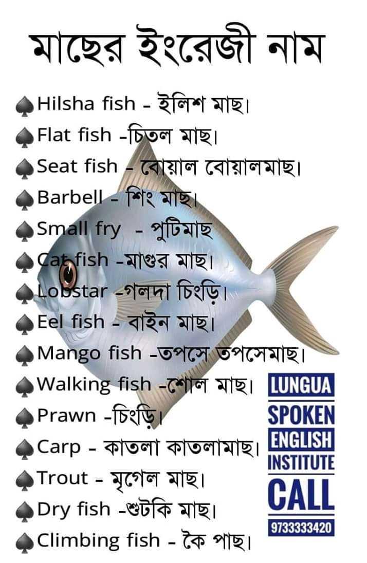 📰জেনারেল নলেজ - মাছের ইংরেজী নাম Hilsha fish - ইলিশ মাছ । Flat fish - চিতল মাছ । Seat fish - বােয়াল বােয়ালমাছ । Barbell - শিং মাছ । Small fry - পুটিমাছ dahfish - মাগুর মাছ । qLobstar - গলদা চিংড়ি । Eel fish - বাইন মাছ । Mango fish - তপসে তপসেমাছ । Walking fish - শােল মাছ । [ UNGUA Prawn - চিংড়ি । SPOKEN Carp - কাতলা কাতলামাছ । EN ENGLISH INSTITUTE Trout - মৃগেল মাছ । CALL Dry fish - শুটকি মাছ । Climbing fish - কৈ পাছ । । 3733333420 ] - ShareChat