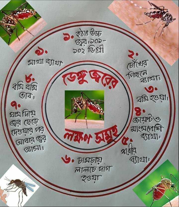 ডেঙ্গু সচেতনতা 📣 - ৯ . হঠাৎ উট উঠব । ৯০১ ১০২ ডিগ্রী মাথা ব্যাথা চোঁখেব পিছনে । ব্যাত্যা ' বমি বমি   ভাব । বমি হওয়া । ঘাম দিয়ে । 1 / / মাংস দেওযার পর আবার জ্বর আসা । জয়েন্টও মাংসপেশি . ব্যাথা । থাবাব ব্যাথা । ৬ . ' চামড়ায় লালচে দাগ হওযা - ShareChat