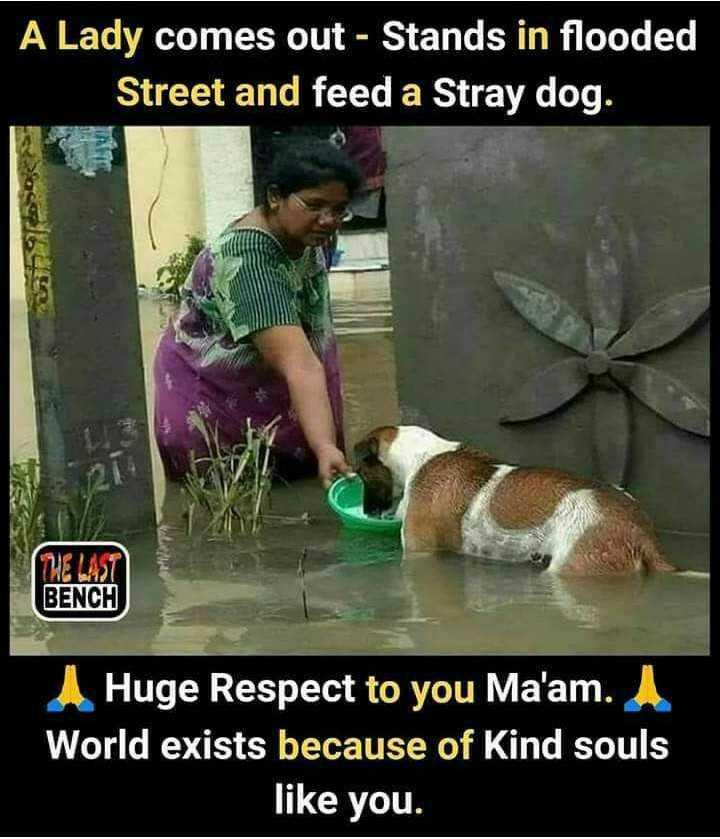দেশে বন্যা সংকট 🌊 - A Lady comes out - Stands in flooded Street and feed a Stray dog . BENCH Huge Respect to you Ma ' am . World exists because of Kind souls like you . - ShareChat