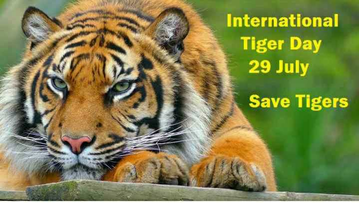 ন্যাশনাল টাইগার ডে  🐯 - International Tiger Day 29 July Save Tigers - ShareChat