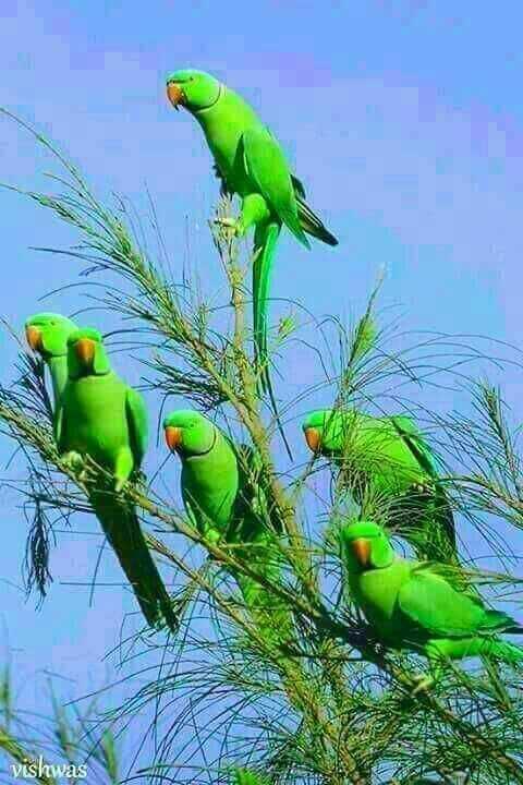 🐯প্রিয় জীবজন্তু - vishwas - ShareChat