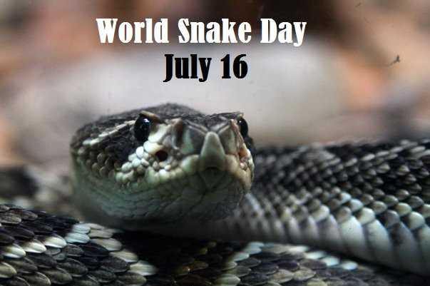 বিশ্ব সাপ দিবস 🐍 - World Snake Day July 16 - ShareChat