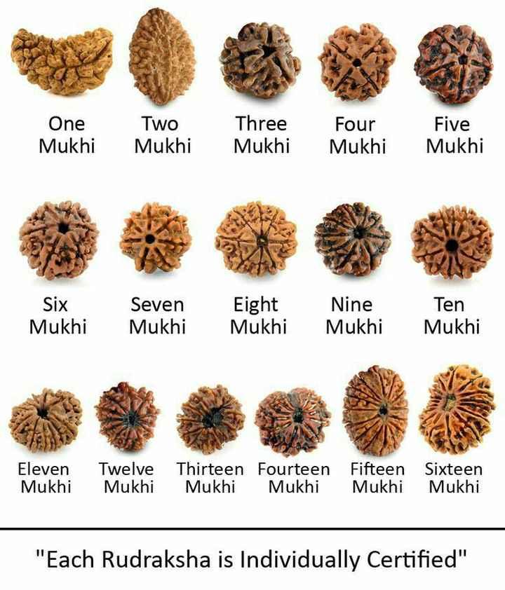 🐍ভোলানাথ - One Two Mukhi Mukhi Three Mukhi Four Mukhi Five Mukhi Six Mukhi Seven Mukhi Eight Mukhi Nine Mukhi Ten Mukhi Eleven Twelve Thirteen Fourteen Fifteen Sixteen Mukhi Mukhi Mukhi Mukhi Mukhi Mukhi Each Rudraksha is Individually Certified - ShareChat