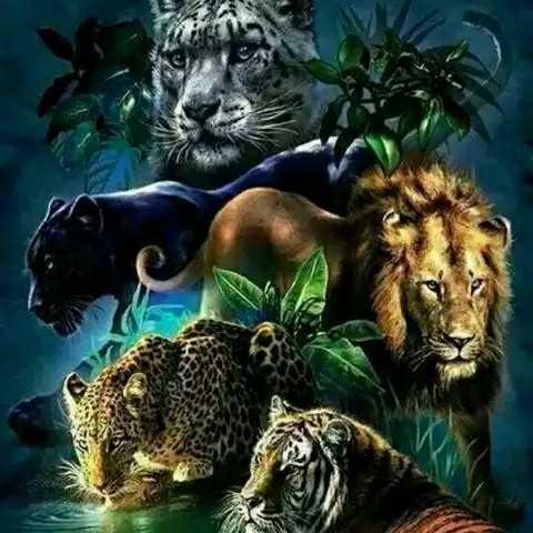 🐄🐮 মোৰ প্ৰিয় জন্তু🐈🐕 - ShareChat