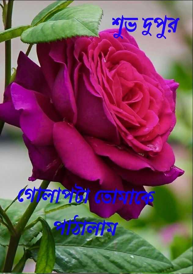🌝শীতের দুপুর🌞 - ( শুভ দুপুর গলা তােমাকে - ShareChat