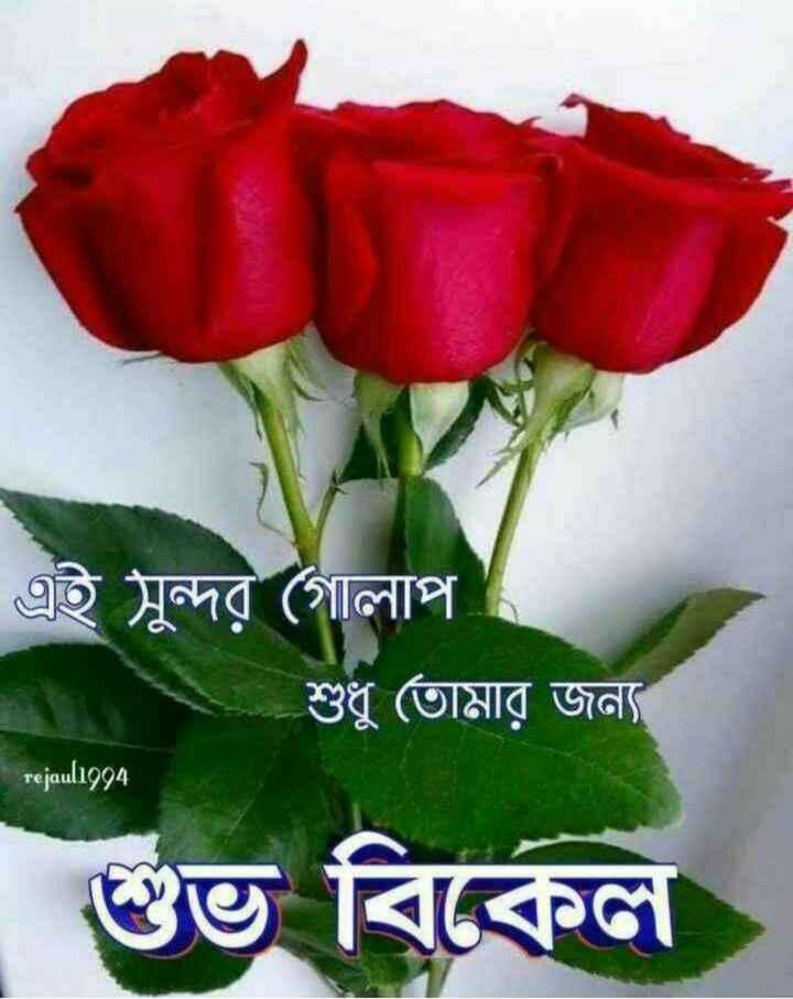 🙌শুভকামনা - এই সুন্দর গােলাপ শুধু তােমার জন্য rejaul1994 শুভ বিকেল - ShareChat
