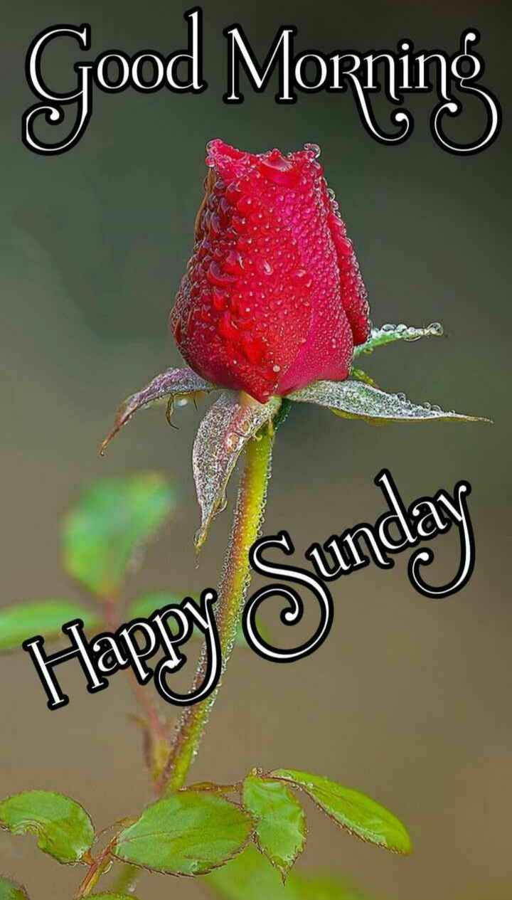 🙌শুভকামনা - Good Morning Happy Sunday - ShareChat