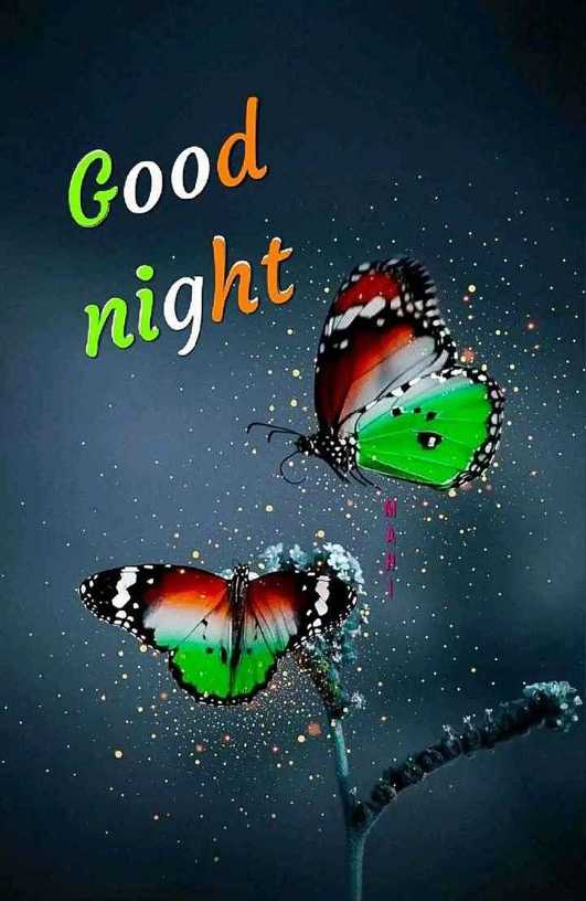 🙌শুভকামনা - Good night - ShareChat