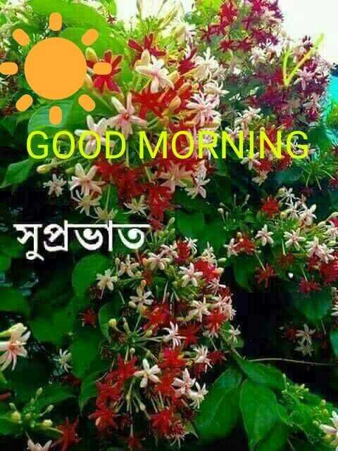 🙌শুভকামনা - es MORNING সুপ্রভাত - ShareChat