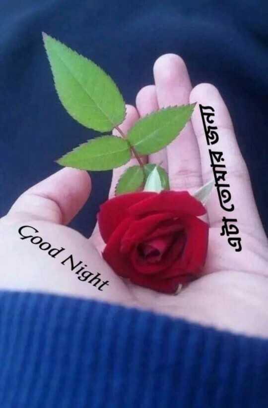 🙌শুভকামনা - Good Night এটা তােমার জন্য - ShareChat