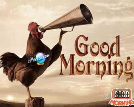 🙌শুভকামনা - Good Morning GOOD MORNING - ShareChat