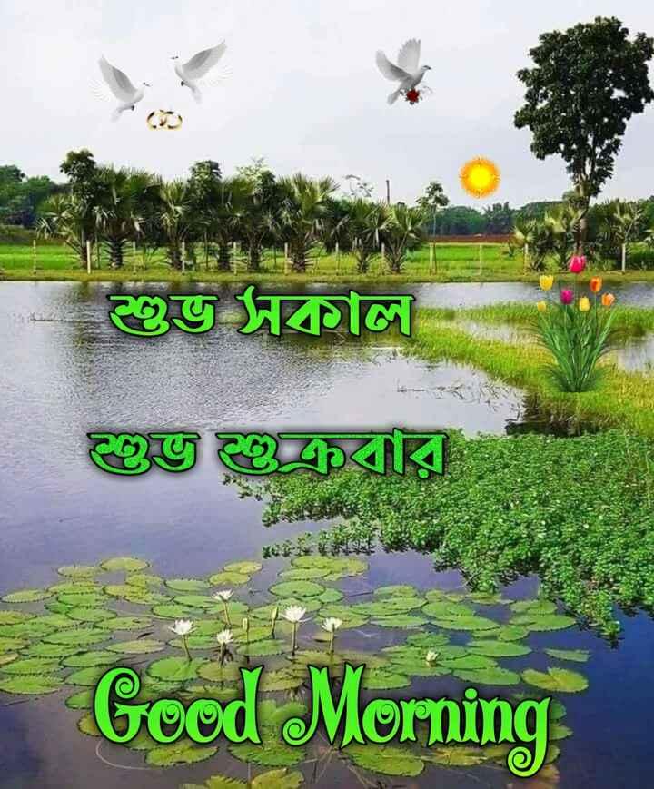 🙌শুভকামনা - শুভ সকাল । গু এবার । Good Morning - ShareChat