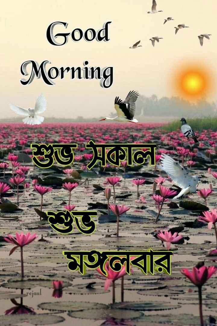 🙌শুভকামনা - | Good Morning * * * শুত বিকাল মতবার । - ShareChat