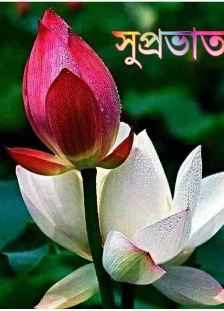 🙌শুভকামনা - সুপ্রভাত - ShareChat